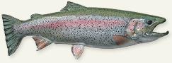 Alaska Fish Mounts