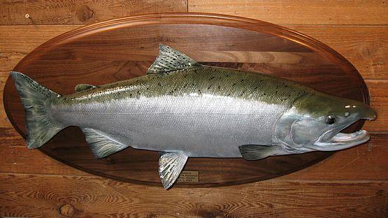 Silver Salmon Walnut Panel