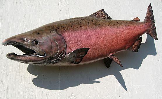 Chinook Salmon Reproduction