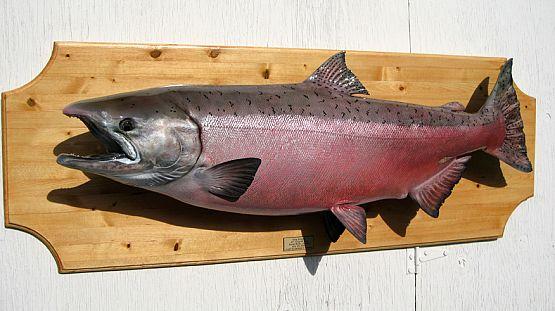 King Salmon Fish Taxidermy