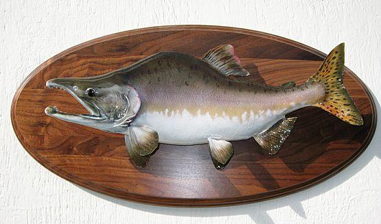Pink Salmon On Walnut Panel