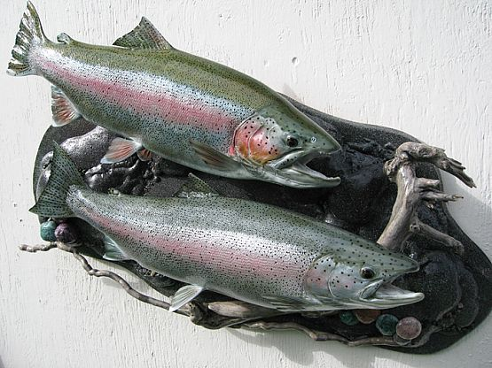 Rainbow Trout Replica Mount