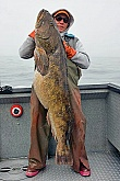 Picture of Big Lingcod: Picture of a Big Lingcod - Alaska's Real Life Taxidermy