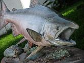 Alaskan King Salmon Fish Mount: Alaskan King Salmon: Artistic Fish Mount Taxidermy