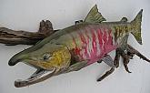 Chum Salmon Reproduction Fish Mount: Alaskan Chum Salmon-Reproduction Fish Mounts by Mark Oslund