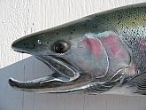 Steelhead Fish Reproduction: Steelhead Fish Mount Reproduction Closeup
