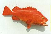 Yelloweye Rockfish Mount: Yelloweye Rockfish Fish Mount