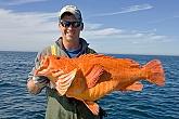 Big Yelloweye Rockfish: Yelloweye Rockfish - Alaska's Real Life Taxidermy - Saltwater Fish Replicas